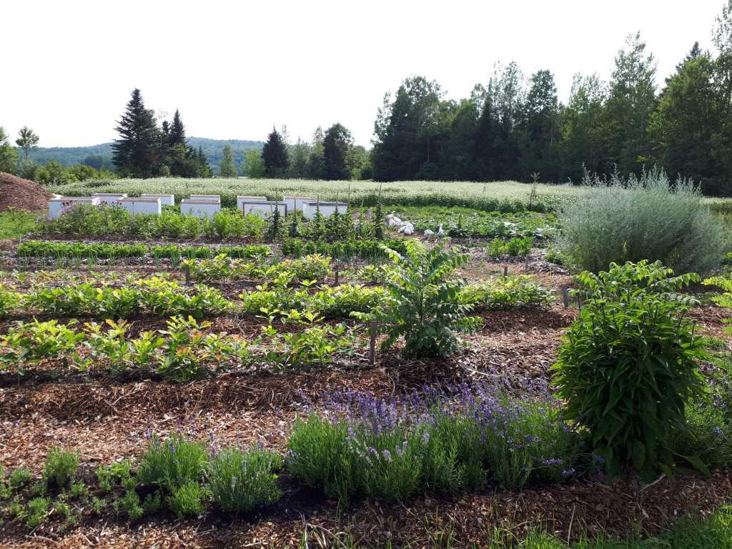 forêt prendre racine charette jardin